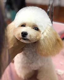 北京宠物美容培训班