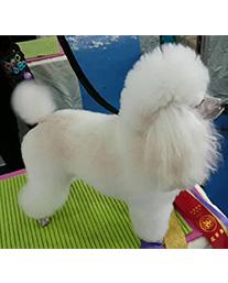 河北区宠物美容学校